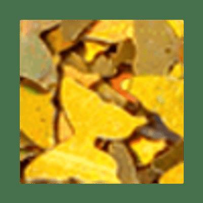 Borboleta-Ouro
