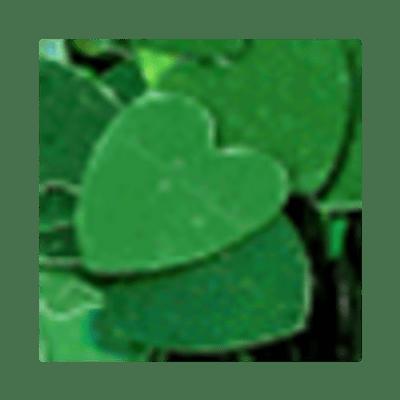 Coracao-Verde